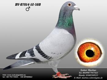 62DV-07814-12-560 1ed1