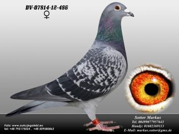 75DV-07814-12-486 0ed1