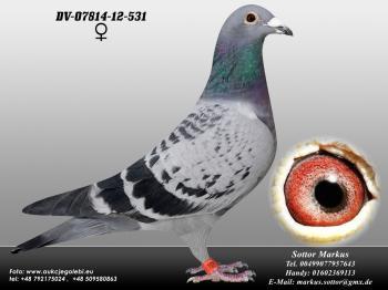 77DV-07814-12-531 0ed1