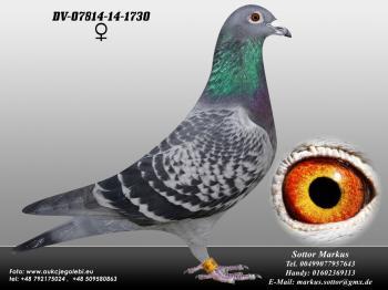 79DV-07814-14-1730 0ed1