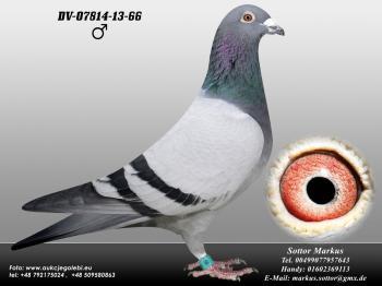 80DV-07814-13-66 1ed1