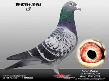 82DV-07814-12-818 1ed1